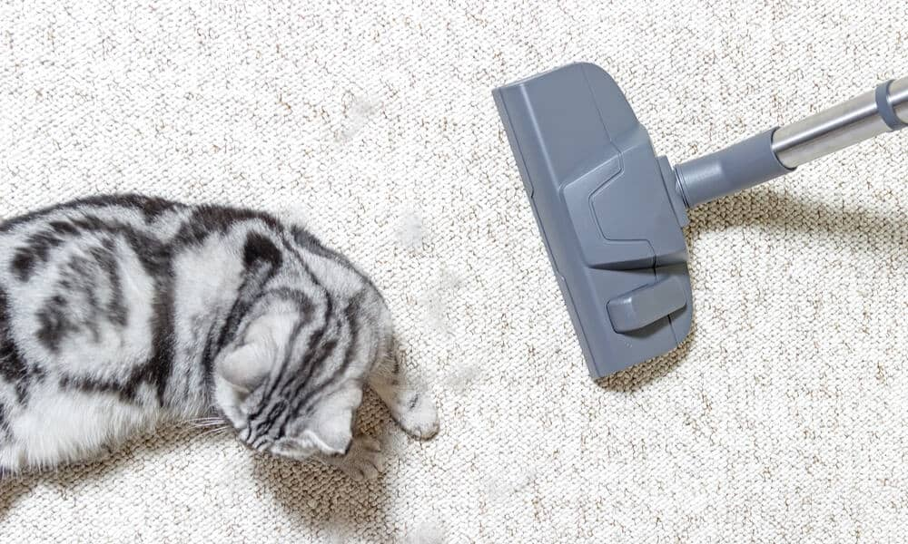 best-vacuum-cleaner-for-pets