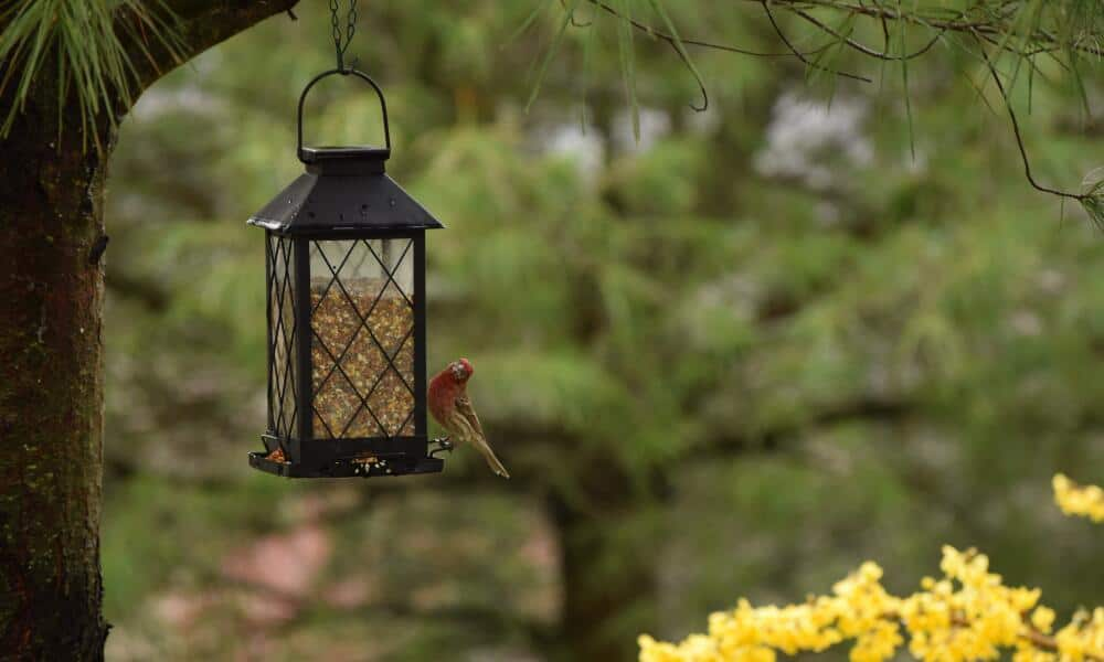 Best Bird Feeder On The Market